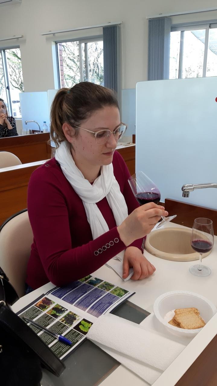 Degustação suco de uvas Embrapa